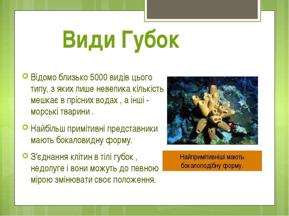 Види Губок Відомо близько 5000 видів цього типу, з яких лише невелика кількіс...