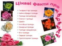Теофраст про троянди. Чайно-гібридні троянди. Троянди флорибунда. Плетисті тр...