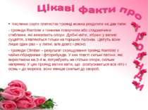 Численні сорти плетистих троянд можна розділити на два типи: - троянди Ramble...