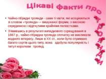 Чайно-гібридні троянди- саме ті квіти, які асоціюються зі словом «троянда» –...