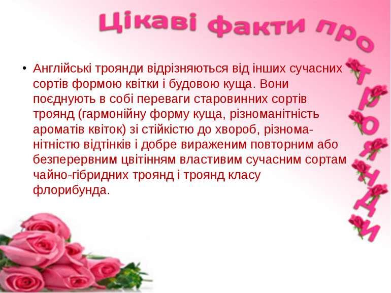 Англійські троянди відрізняються від інших сучасних сортів формою квітки і бу...