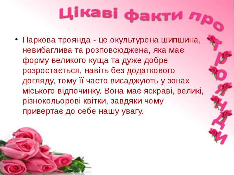 Паркова троянда - це окультурена шипшина, невибаглива та розповсюджена, яка м...