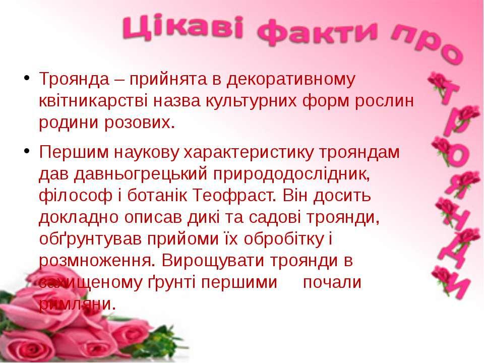 Троянда – прийнята в декоративному квітникарстві назва культурних форм рослин...