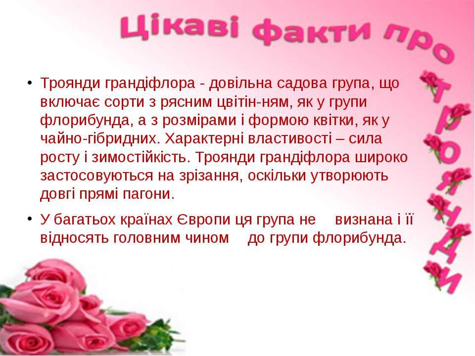 Троянди грандіфлора - довільна садова група, що включає сорти з рясним цвітін...