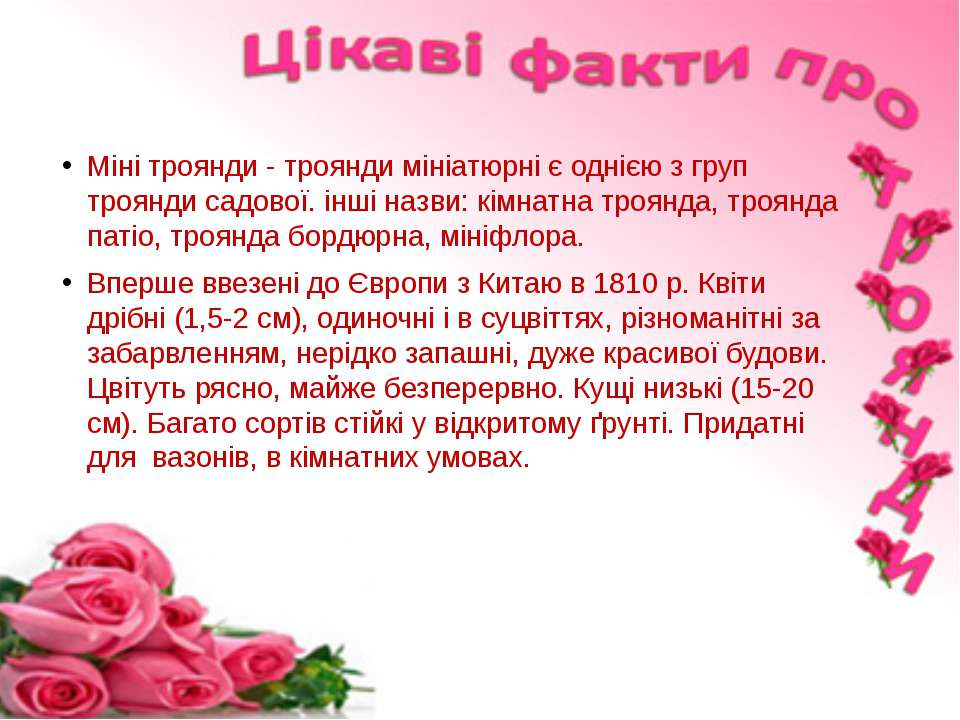 Міні троянди - троянди мініатюрні є однією з груп троянди садової. інші назви...