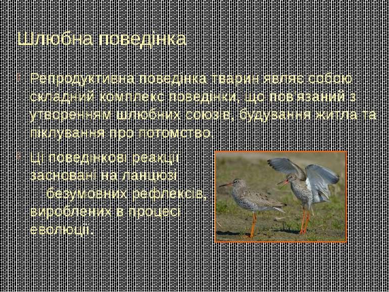 Шлюбна поведінка Репродуктивна поведінка тварин являє собою складний комплекс...