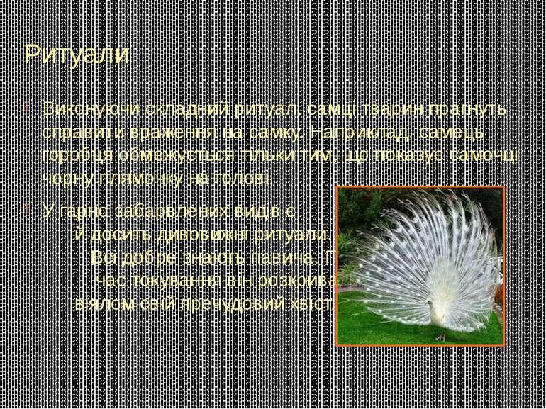 Ритуали Виконуючи складний ритуал, самці тварин прагнуть справити враження на...