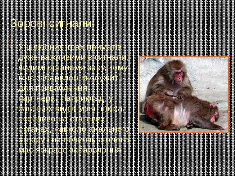 Зорові сигнали У шлюбних іграх приматів дуже важливими є сигнали, видимі орга...