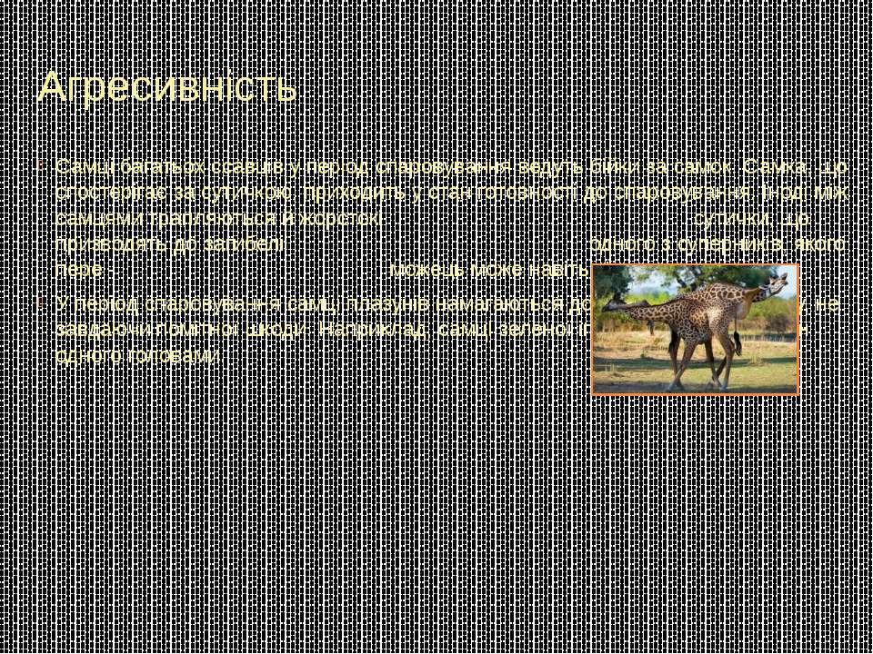 Агресивність Самці багатьох ссавців у період спаровування ведуть бійки за сам...