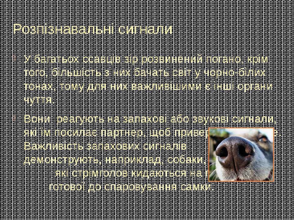 Розпізнавальні сигнали У багатьох ссавців зір розвинений погано, крім того, б...