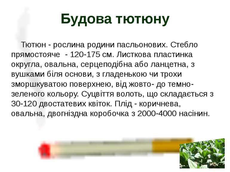 Тютюн- рослина родини пасльонових. Стебло прямостояче - 120-175 см. Листкова...