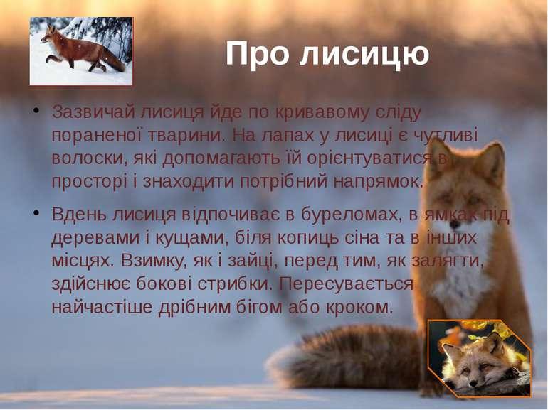 Зазвичай лисиця йде по кривавому сліду пораненої тварини. Налапаху лисиціє...