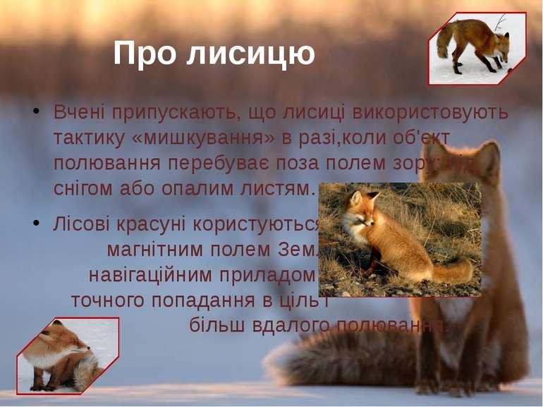 Вчені припускають, що лисиці використовують тактику«мишкування» вразі,коли...
