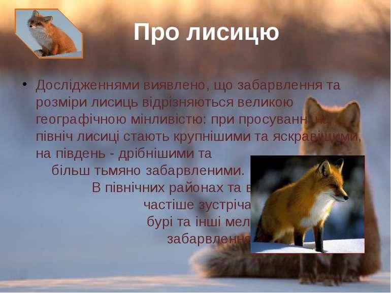 Дослідженнями виявлено, що забарвлення та розміри лисиць відрізняються велико...