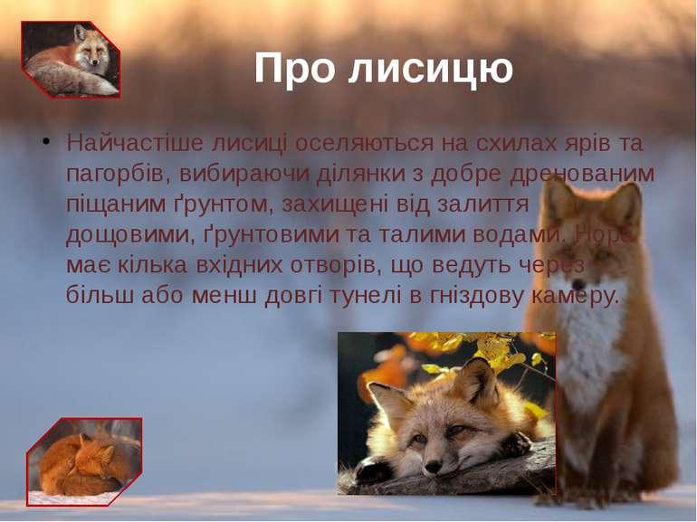 Найчастіше лисиці оселяються на схилах ярів та пагорбів, вибираючи ділянки з ...
