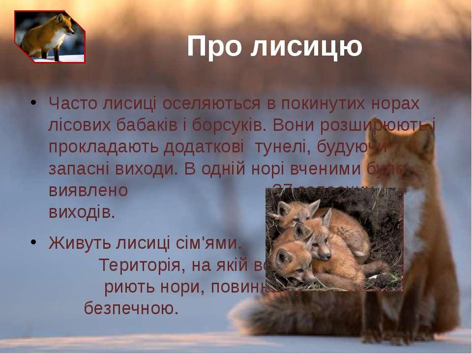 Часто лисиці оселяються в покинутих норах лісових бабаківіборсуків. Вони ро...