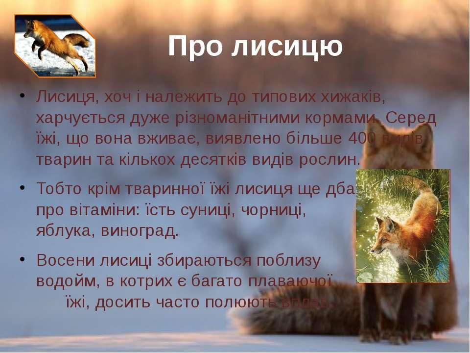 Лисиця, хоч і належить до типових хижаків, харчується дуже різноманітними кор...