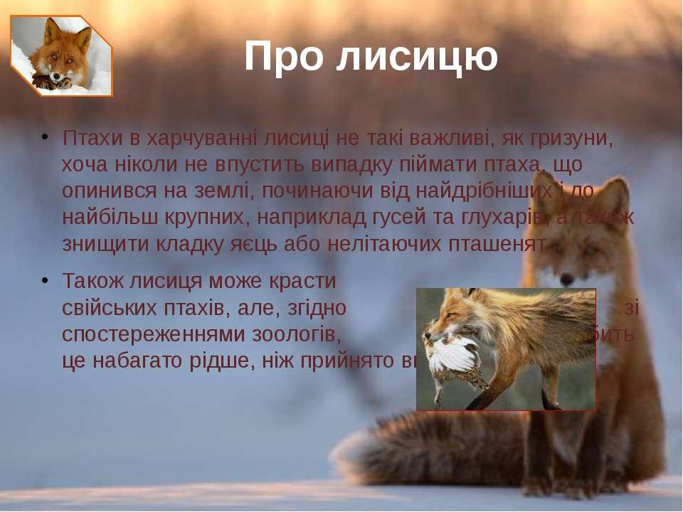Птахив харчуванні лисиці не такі важливі, як гризуни, хоча ніколи не впустит...