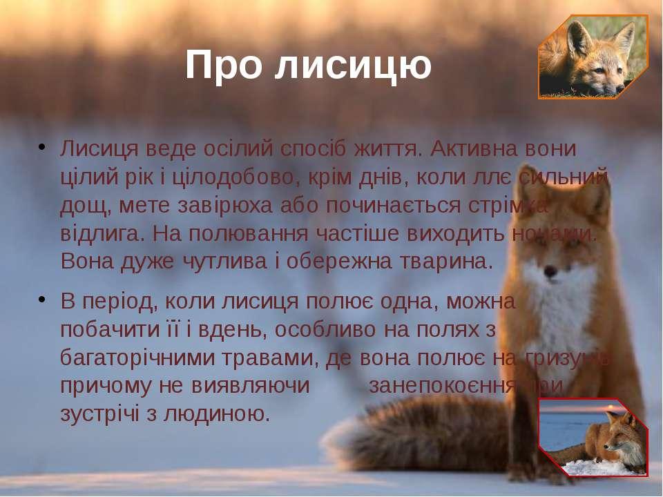 Лисиця веде осілий спосіб життя. Активна вони цілий рік і цілодобово, крім дн...