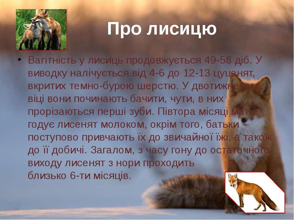 Вагітністьу лисиць продовжується 49-58 діб. У виводку налічується від 4-6 до...