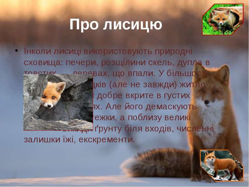 Інколи лисиці використовують природні сховища: печери, розщілини скель, дупла...