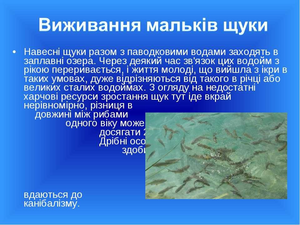 Навесні щуки разом з паводковими водами заходять в заплавні озера. Через деяк...