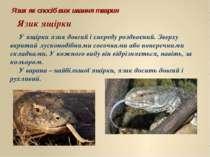 Язик як спосіб виживання тварин Язик ящірки У ящірки язик довгий і спереду ро...