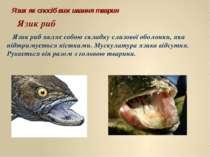 Язик риб Язик риб являє собою складку слизової оболонки, яка підтримується кі...