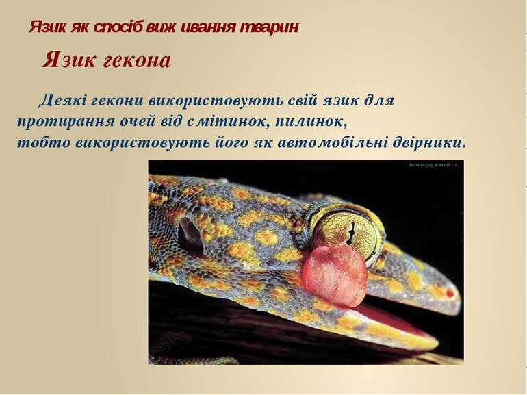 Деякі гекони використовують свій язик для протирання очей від смітинок, пилин...