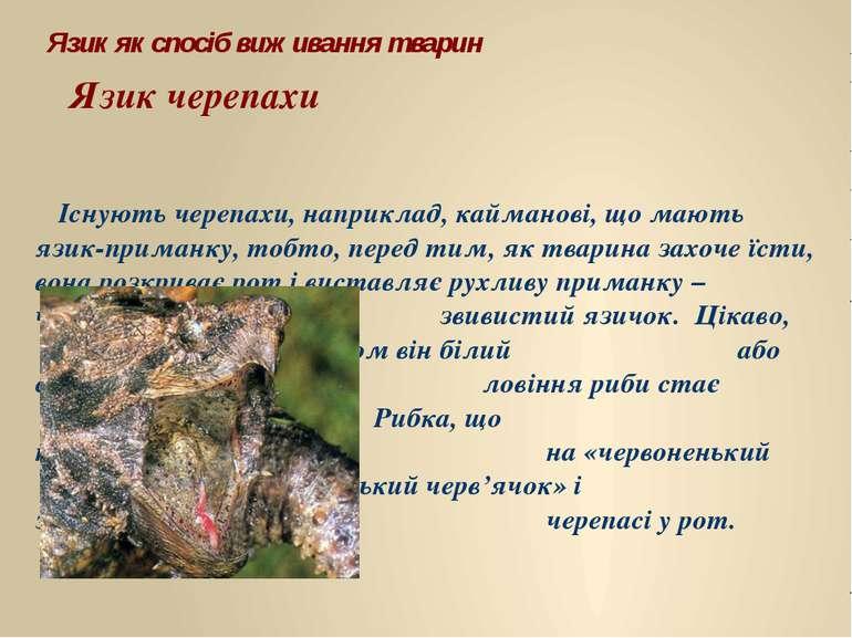 Існують черепахи, наприклад, кайманові, що мають язик-приманку, тобто, перед ...