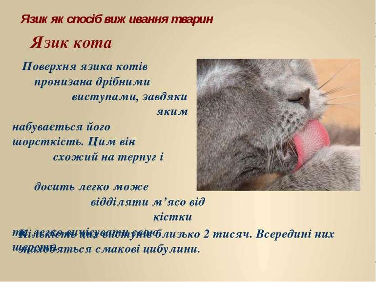 Язик як спосіб виживання тварин Язик кота Поверхня язика котів пронизана дріб...
