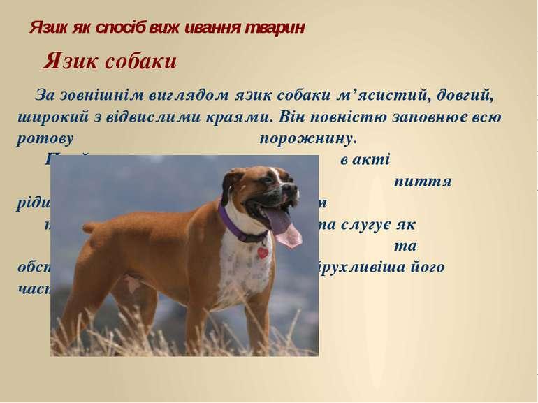 Язик як спосіб виживання тварин За зовнішнім виглядом язик собаки м'ясистий, ...