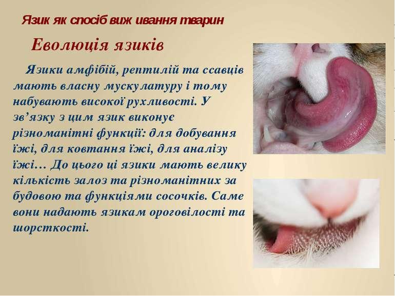 Язик як спосіб виживання тварин Еволюція язиків Язики амфібій, рептилій та сс...