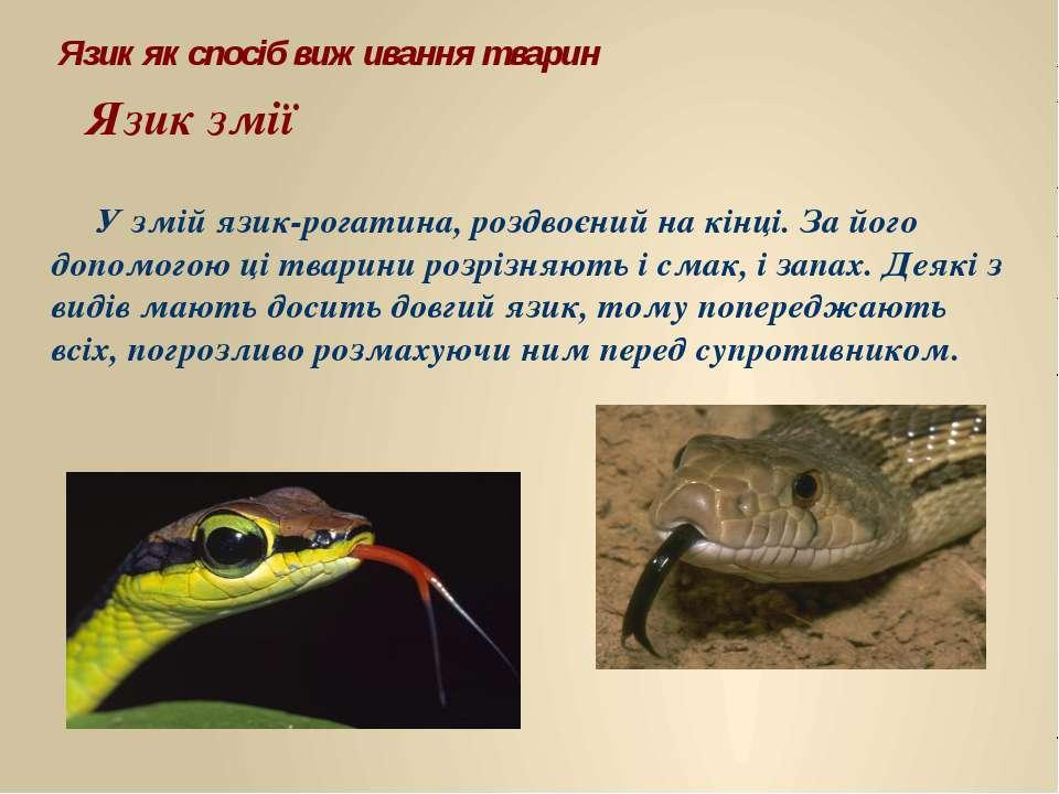 У змій язик-рогатина, роздвоєний на кінці. За його допомогою ці тварини розрі...