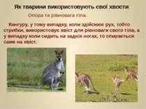 Як тварини використовують свої хвости Кенгуру, у тому випадку, коли здійснює ...