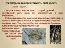 Скат-хвостокол має на хвості гострий, довгий, зазубрений шип, яким він корист...