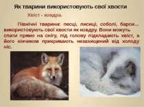 Північні тварини: песці, лисиці, соболі, барси… використовують свої хвости як...