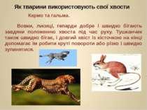 Вовки, лисиці, гепарди добре і швидко бігають завдяки положенню хвоста під ча...