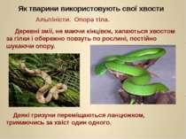 Деревні змії, не маючи кінцівок, хапаються хвостом за гілки і обережно повзут...
