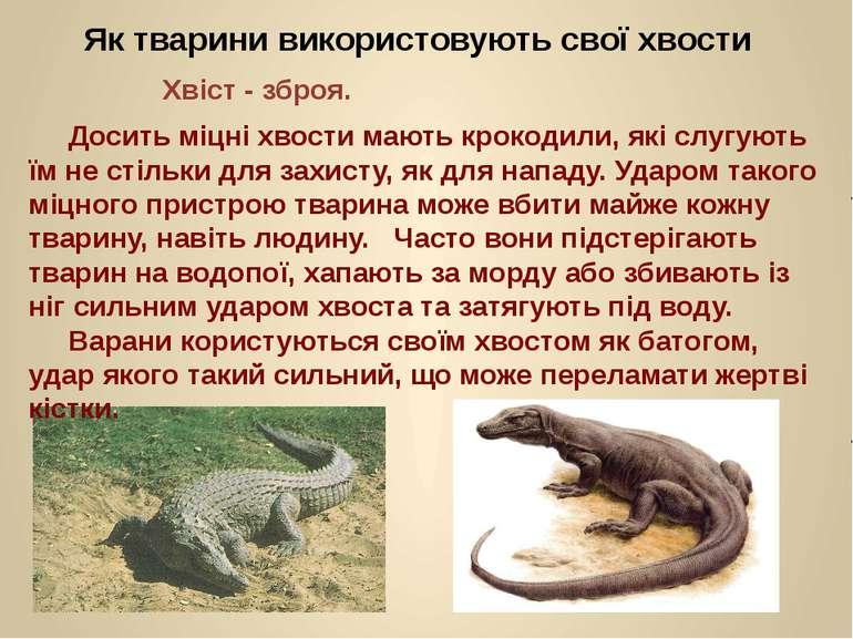 Як тварини використовують свої хвости Хвіст - зброя. Досить міцні хвости мают...