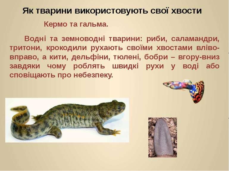 Водні та земноводні тварини: риби, саламандри, тритони, крокодили рухають сво...