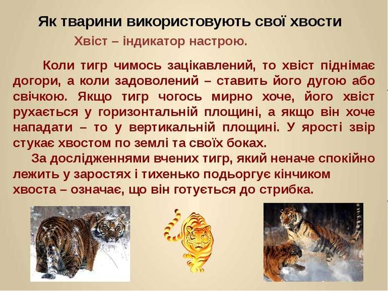 Коли тигр чимось зацікавлений, то хвіст піднімає догори, а коли задоволений –...