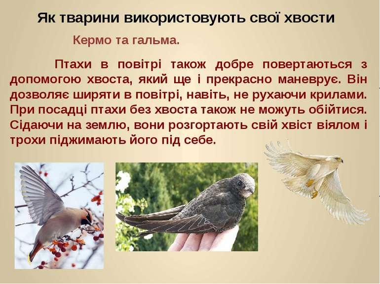 Птахи в повітрі також добре повертаються з допомогою хвоста, який ще і прекра...