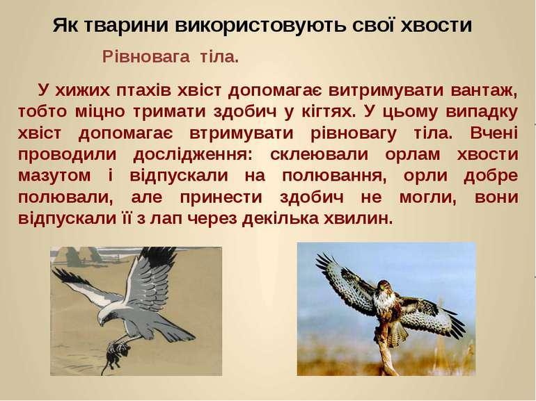 Як тварини використовують свої хвости Рівновага тіла. У хижих птахів хвіст до...