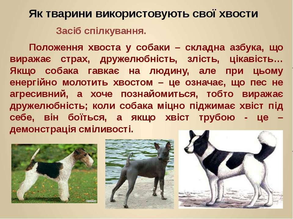 Положення хвоста у собаки – складна азбука, що виражає страх, дружелюбність, ...