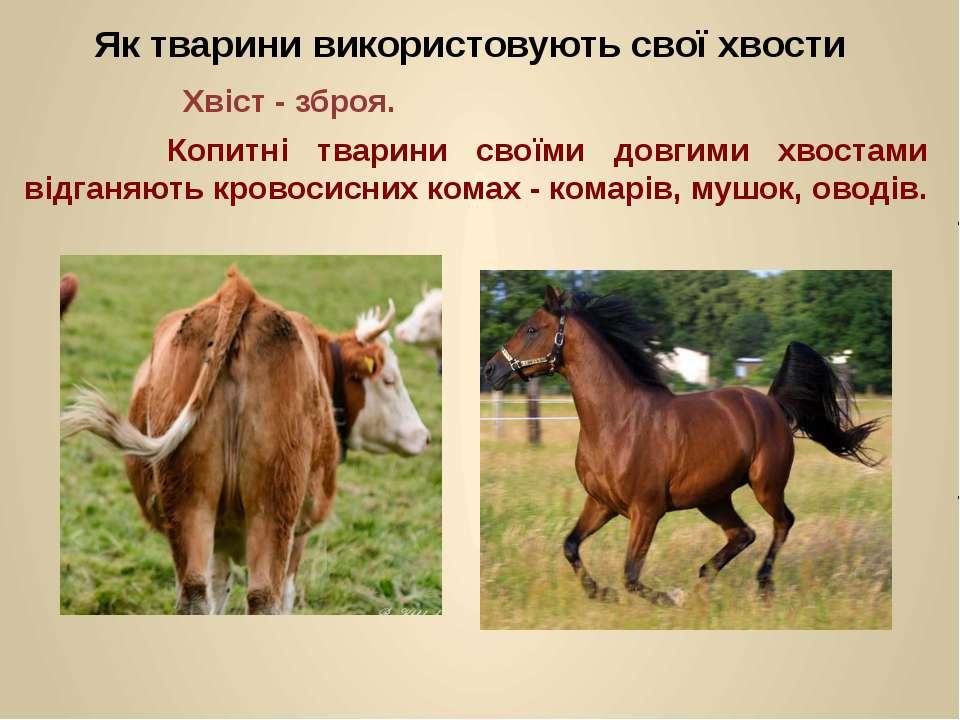 Копитні тварини своїми довгими хвостами відганяють кровосисних комах - комарі...