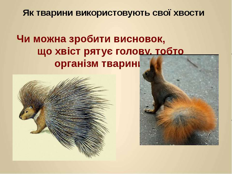 Чи можна зробити висновок, що хвіст рятує голову, тобто організм тварини в ці...