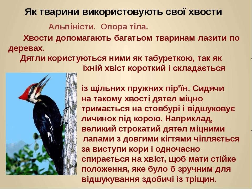 Хвости допомагають багатьом тваринам лазити по деревах. Дятли користуються ни...