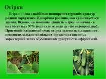 Огірки Огірки - одна з найбільш поширених городніх культур родини гарбузевих....