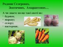 А чи знаєте ви ще такі овочі як: буряки; моркву; селеру; пастернак. Родини Се...